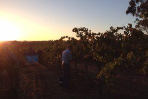Hanpicking by sunrise V14